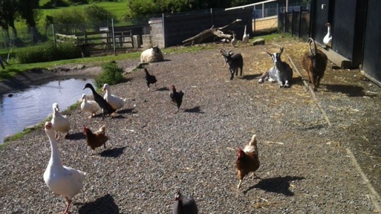 A Day In The Life - Her ie Spends The Day With The DSPCA | Her ie