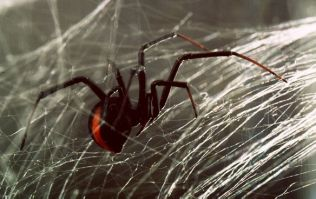 Experts Warn About Increasing Spider Problem in Ireland