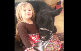 VIDEO: Little Girl Lets a Very Special and Unusual Visitor Into Her House