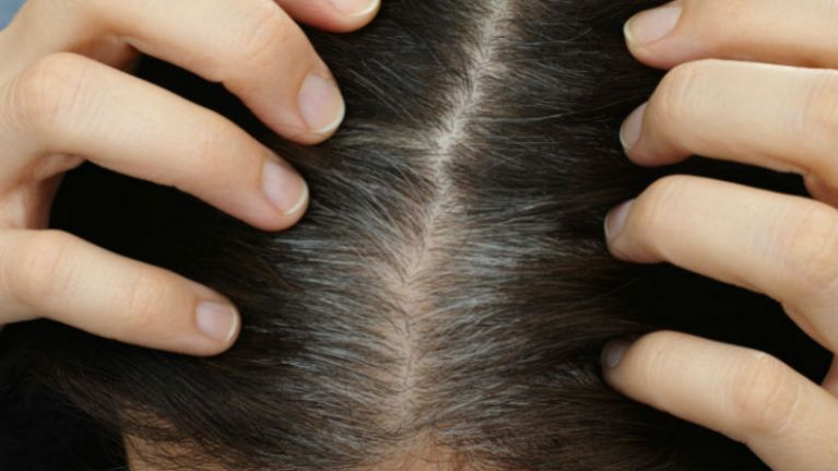 Does pulling out grey hairs cause more to grow back?
