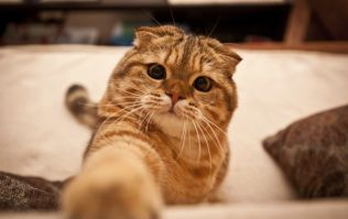 People of the Internet, Rejoice! Watching Cat Videos is Good for You
