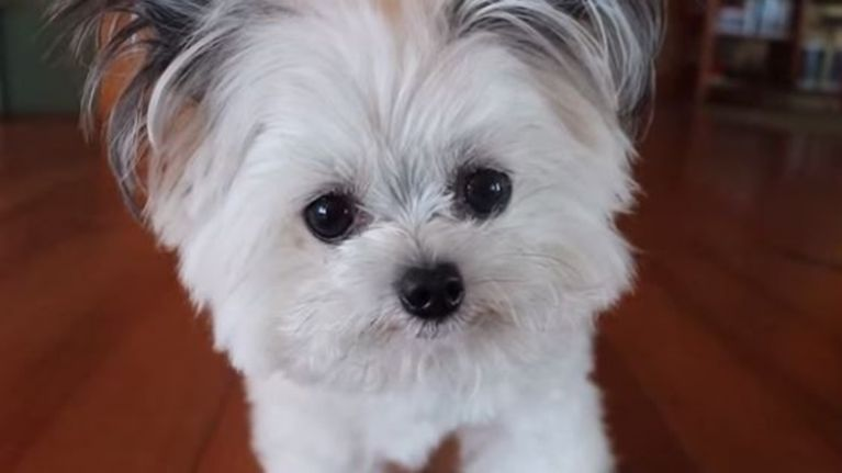 VIDEO: Norbert Might Just Be The Cutest Dog We've Ever Seen