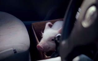 WATCH: Meet The Pig That's Captured The Hearts of The Nation