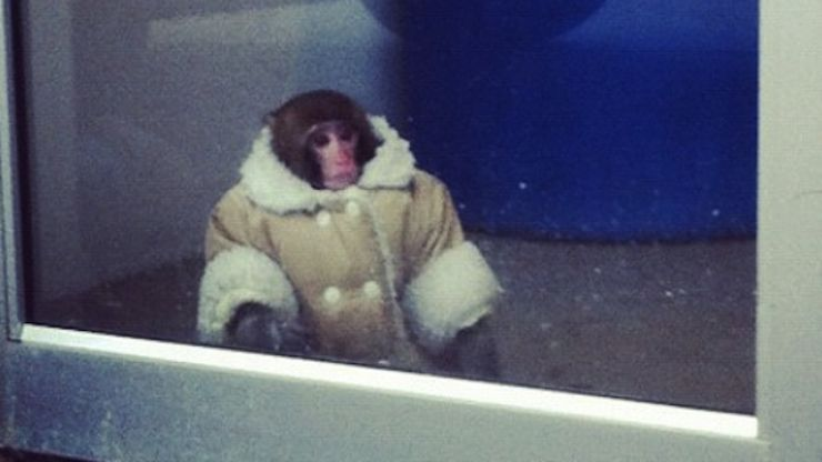 It's been 4 years since that monkey was found in IKEA, but where is he now?