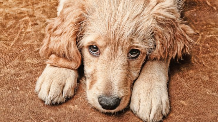 Dogs officially hate hugs and we are broken-hearted