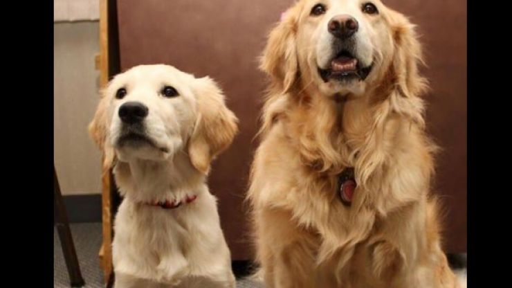 New research finds that dogs actually love everyone, and we're bawling crying