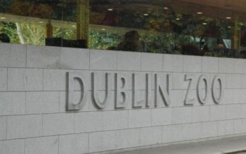 A new baby elephant has been born in Dublin Zoo