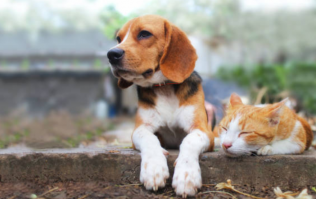 These are the conclusive differences between cat lovers and dog lovers