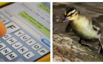 """There's one simple trick to fix your """"Ducking"""" autocorrect problem"""