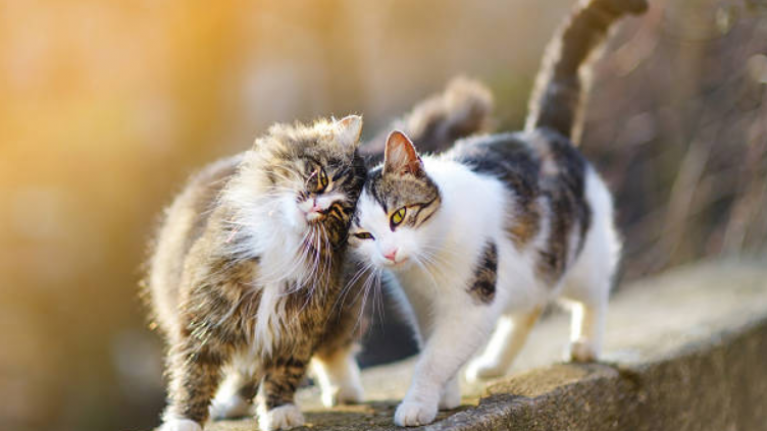 Turns out cat-owners are much kinkier than their pet-free counterparts