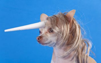 It's National Unicorn Day and twitter is having a GREAT time