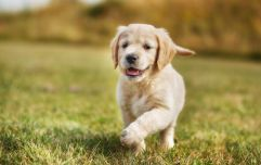 Pooper scoopers be gone: Dogs can now avail of designated toilets in Kerry