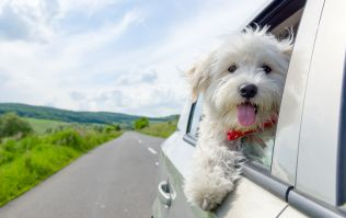 [CLOSED] Win a luxury stay at Castlemartyr Hotel and don't forget your pup