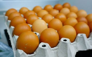 Contaminated eggs supplied to Irish food businesses, says FSAI