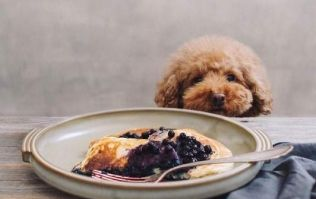 This October you can brunch with YOUR DOG in Dublin