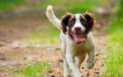 AWWW! It's been proven that dogs know that they are 'good boys'