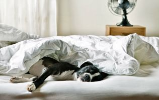Hurrah! Sleeping with your dog beside you has a brilliant knock-on effect