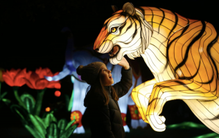 There's a new nighttime event coming to Dublin Zoo and it sounds amazing