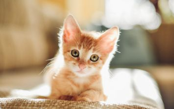 Calling all cat lovers, we have the perfect Valentine's Day plans for you