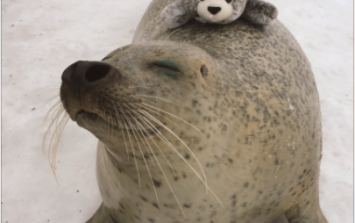 A real seal played with his stuffed toy counterpart... and the result is cuteness overload