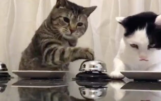 These bell-ringing cats are equal parts amazing and infuriating