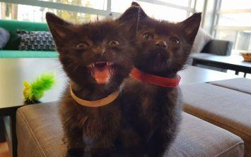 Dublin's cat café has announced that it is closing its doors