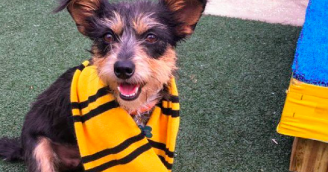 This shelter sorts dogs into Hogwarts houses to help get them adopted