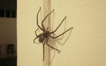 Fact-check: this is how many spiders you actually swallow in your sleep