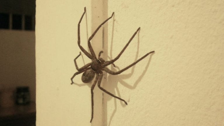 This easy hack will keep spiders OUT of your house this summer