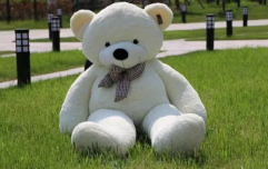 This adorable giant cuddly bear is going viral for all the wrong reasons
