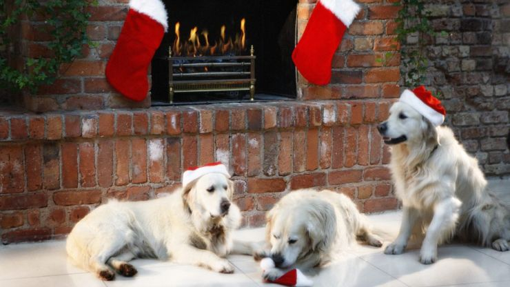 A special Santa's grotto has opened just for dogs, and it's the purest thing we've ever seen