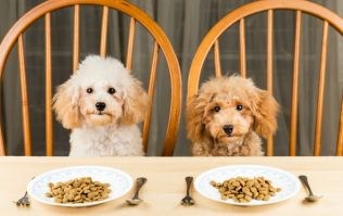 Study reveals certain dog food which is dangerous for owners and dogs