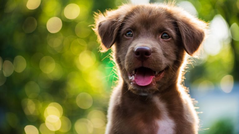 Seven foods you should avoid feeding your dog