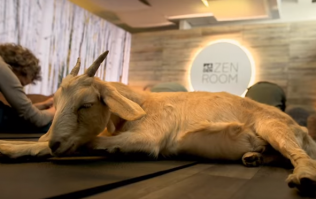 This airport is offering Goat Yoga classes and we want to go!