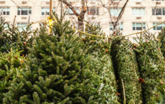 The great, eco-friendly alternative to dumping your Christmas tree