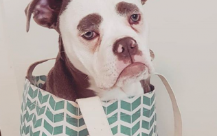 Here is the saddest dog in the world and we relate to her so, so much