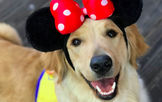 These service dogs in training went to Disneyland and the photos are too pure