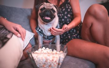 Move over bae... Our pets are our new Netflix viewing partners