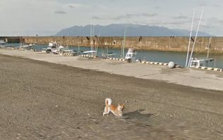 There's a dog following the Google Street View car and he is precious