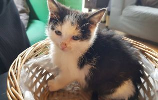 The Cat Lounge in Dublin issues urgent appeal after one of their kittens is taken