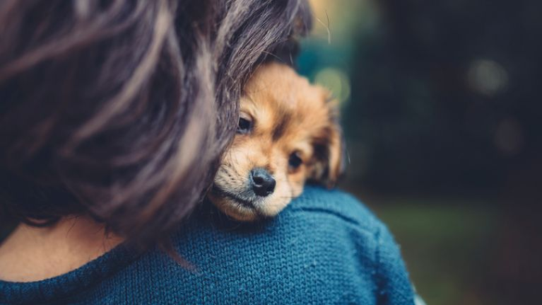 If you love puppies then this company in Dublin is where you NEED to work