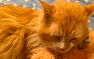 Cat who walked 19 km back to owners who rejected him finds new home