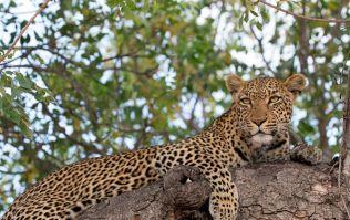 Toddler dies in leopard attack at wildlife park in Uganda