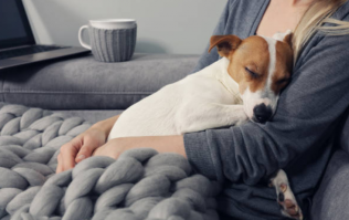 Turns out, dogs obey women more than they do men