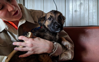 Abandoned Chernobyl dogs rescued and set to get new homes soon