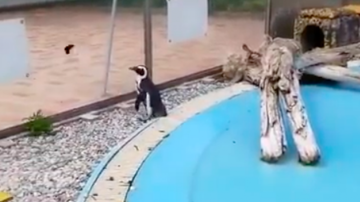 A penguin chasing a butterfly is the content that you need to see today