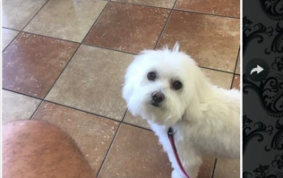 Dad picks up wrong dog from the groomer, and we're laughing SO hard