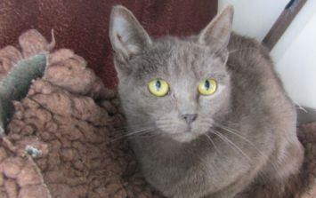The ISPCA are seeking homes for 44 lovely cats seized from a property in Meath