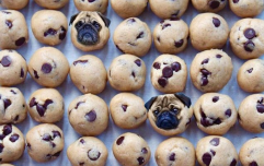 This Insta photoshops dog faces into food, and you're welcome