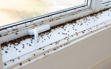 Fly infestations expected during hot weather but here's how to keep them out